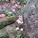 椿の花落つる