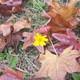 どうも今年の「秋」は駆け足のようです